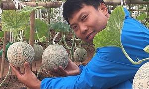 Chàng kỹ sư công nghệ về quê trồng dưa lưới khắc chữ