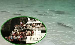 Môi trường ở vịnh Thái Lan bị cấm khai thác du lịch đã được cải thiện