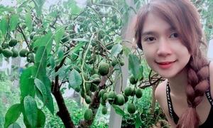 Vườn cây trái của Lý Hải - Minh Hà an toàn sau bão