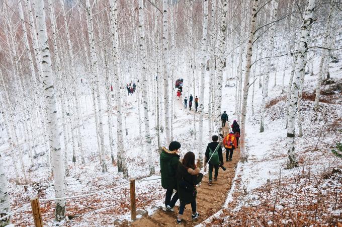 Tuyết khắp nơi, trắng trời phủ kín mặt đất, giăng trên cây hay vương trên những nụ hoa đêm, lóng lánh và tinh khiết.