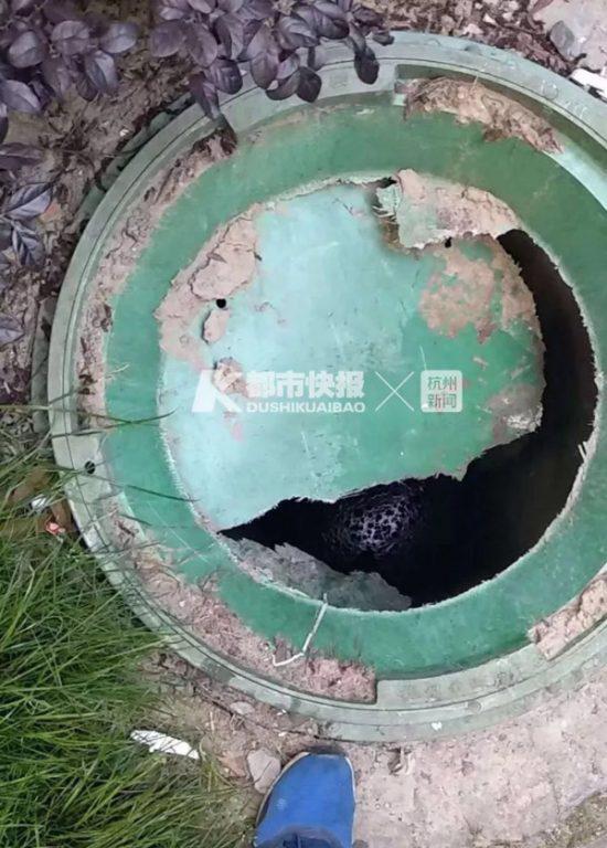 Chiếc nắp cống bằng vật liệu giống nhựa hư hỏng được lắp đặt ở bãi đậu xe Chiết Giang, Trung Quốc. Ảnh: Hangzhou Daily.
