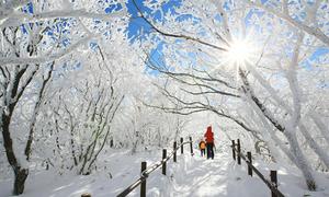 Khu rừng tuyết trắng như trong cổ tích ở Hàn Quốc