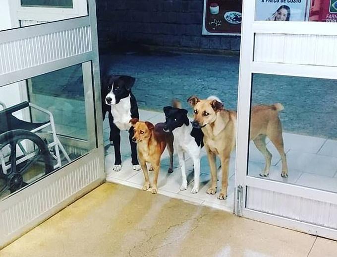 Bốn con chó đứng đợi chủ trước cửa bệnh viện Alto Vale, Brazil hôm 10/12. Ảnh: Facebook.