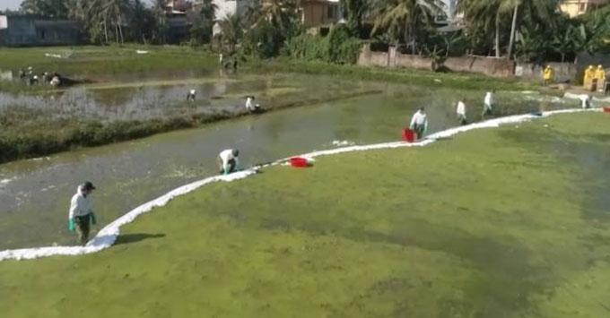 Công nhân thu gom dầu loang trên cánh đồng ở Quảng Hưng.
