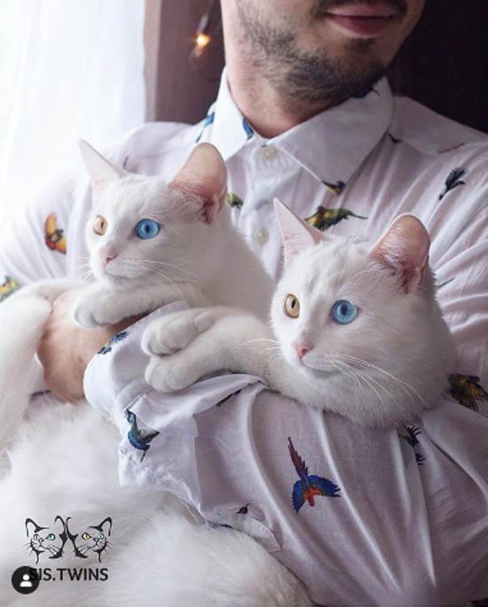 Tất cả các giống thuần chủng đều là kết quả của sự lựa chọn di truyền. Nhưng trên thực tế, hai con mèo không có sự khác biệt về giống loài. Việc chúng may mắn có được những đặc điểm di truyền này thực sự đáng kinh ngạc. Tỷ lệ có được vẻ ngoài như vậy là 1/1 triệu ca. Và chúng tôi cảm thấy rất may mắn khi có được cơ hội sở hữu chúng, anh Dyagilev, hiện sống ở thành phố Saint Petersburg, chia sẻ.