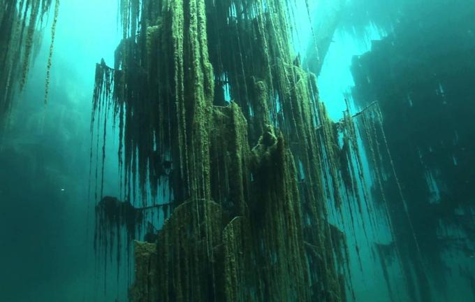 Hồ nước bí ẩn với loại cây mọc ngược dưới đáy - 2
