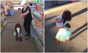 Chó đeo giỏ trên lưng, đi mua sắm với chủ bằng hai chân