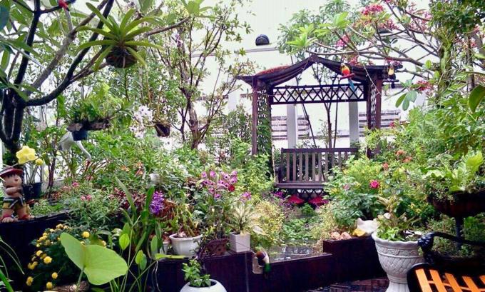 Sở hữu một ngôi nhà ở quận Tân Bình, TP HCM, chị Nguyễn Thanh Hiền, CEO một công ty hoạt động trong lĩnh vực xuất nhập khẩu dành toàn bộ diện tích sân thượng để thỏa mãn niềm đam mê trồng trọt của mình. Khu vườn trên cao được ví như một vựa trái cây,rau củ của chị Hiền có tuổi đờingót nghét chục năm và gần đây được chị cải tạo với mong muốn có một không gian cho gia đình ngồi thư giãncùng nhau vào buổi chiều haynhững ngày cuối tuần. Trong hình là góc ườn trước khi cải tạo.