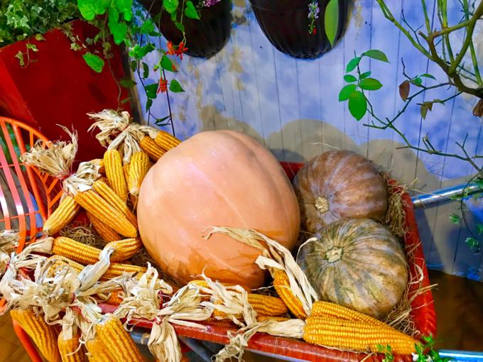 Trái bí ngô kích thước lớn được chị đặt mua riêng.