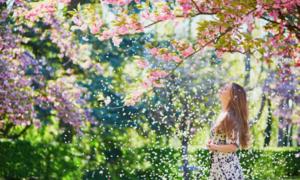 5 lời khuyên dành cho du khách khi đi ngắm hoa anh đào nở
