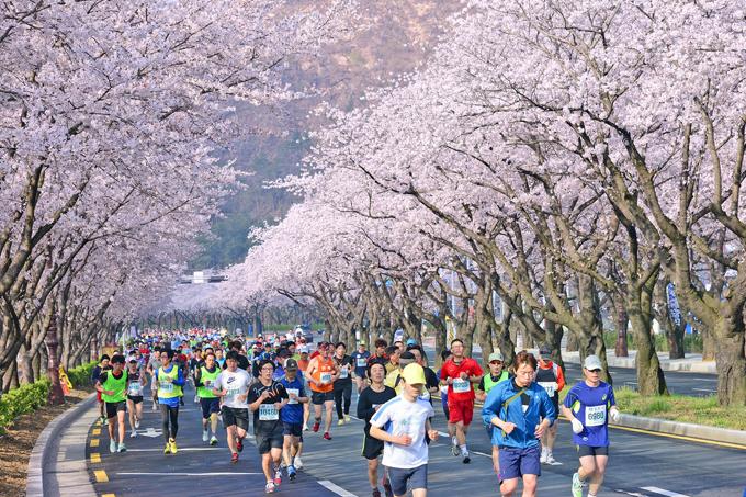 Dự báo thời điểm hoa anh đào nở ở 8 điểm ngắm hoa nổi tiếng Hàn Quốc - 5