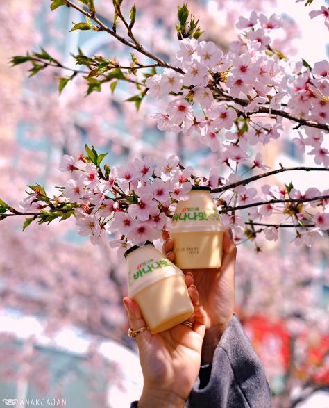 Dự báo thời điểm hoa anh đào nở ở 8 điểm ngắm hoa nổi tiếng Hàn Quốc - 7