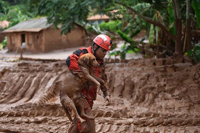 Nhân viên cứu hộ giải cứu một con chó ở Brumadinho hôm 25/1. Ảnh: AP.