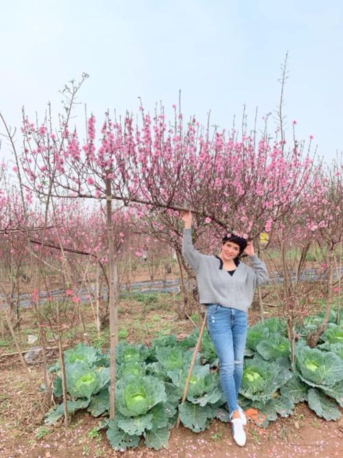 2-3 năm gần đây, những góc nhà của chị Mỹ An (Hồ Tây, Hà Nội) đều rực thắm sắc hoa đào của những cành cỡ khủng, có dáng vút cong. Bà mẹ Hà Nội thường bắt đầu hành trình chọn mua hoa đào của mình từ trước Tết cả tháng. Chị lọ mọ tới tận các vườn đào Nhật Tân để tìm được những cành to khỏe, nhiều nụ, có chiều dài tới 3-4m.