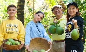 Phi Nhung cùng Trung Dân về miền Tây hái dừa, đi cầu khỉ