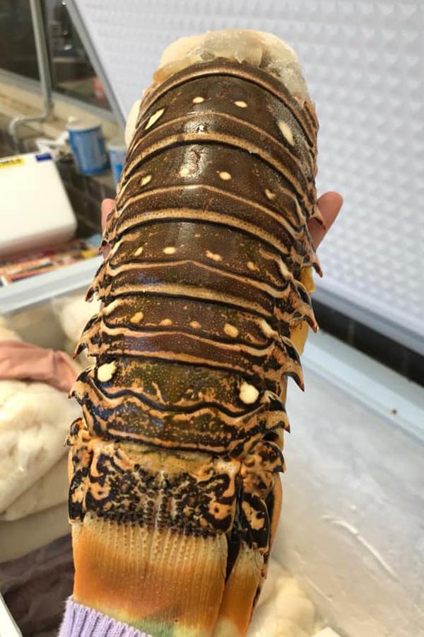 Đuôi tôm hùm cấp đông nặng khoảng 300 - 400 gram.