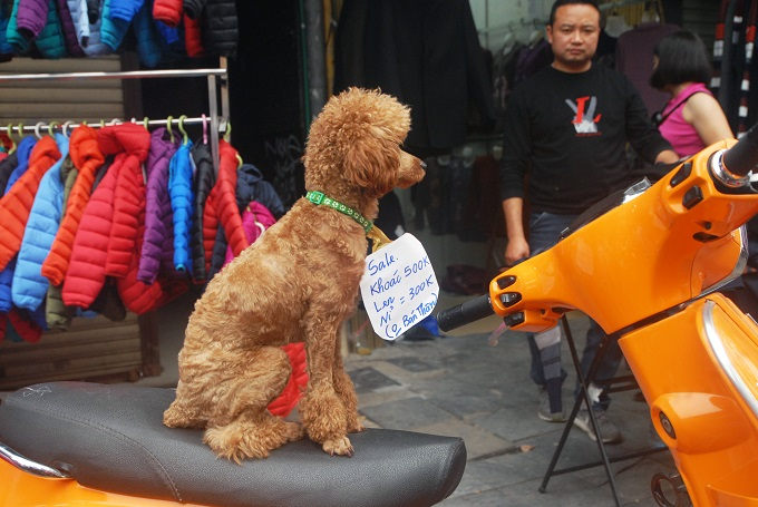 Chó cũng được trưng dụng để hút khách.