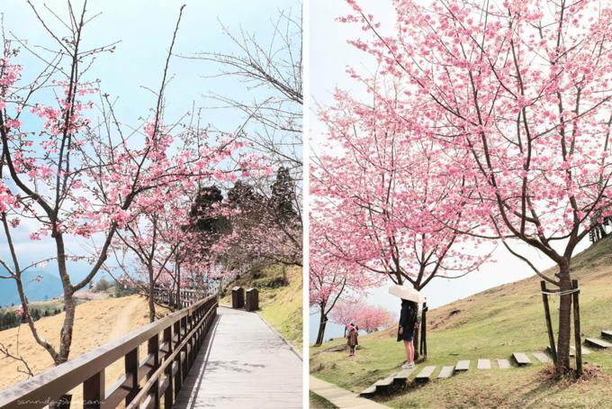 Cảnh sắc mộng mơ ở nông trại Cingjing. Ảnh: Klook