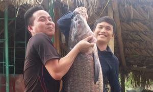 Cá trắm 'khủng' mắc lưới ngư dân Thanh Hoá