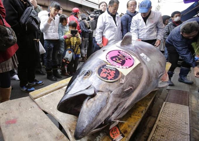Vì sao cá ngừ ở Nhật có giá triệu đô