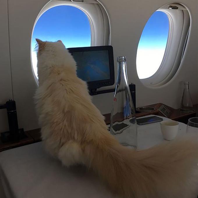 Choupette du lịch trên phi cơ riêng cùng Karl Lagerfeld và có chiêu đãi viên. Ảnh: Instagram.