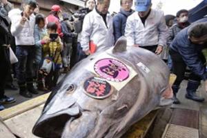 4 bộ phận của lợn nên bỏ lại vì có hại cho sức khỏe
