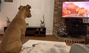 Chó khóc khi xem phim 'Vua sư tử'