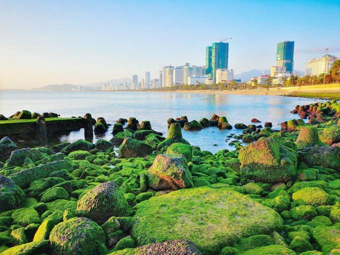 Bãi rêu ngay trung tâm Nha Trang hút khách du xuân - Ngôi sao