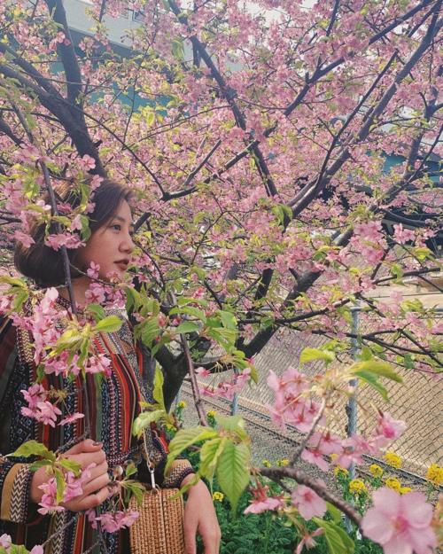Văn Mai Hương hóa thiếu nữ bên hoa anh đào trong chuyến du lịch Nhật Bản.