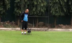 HLV Park chơi đùa với chó sau buổi tập của U23 Việt Nam