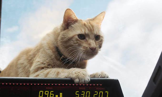 Chú mèo Goose trở thành điểm sáng của phim.