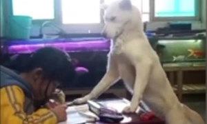 Bố huấn luyện chó ngồi canh con gái học