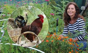 Người phụ nữ về quê trồng rau, nuôi gà sau khi mẹ mất vì ung thư