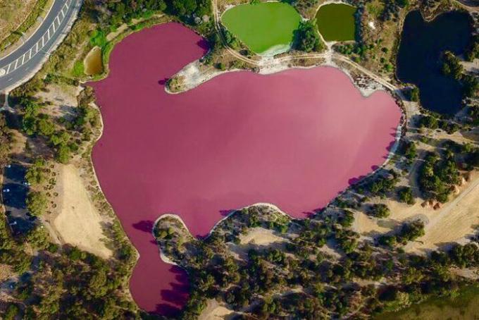 Toàn bộ hồ nước trong công viên Westgate chuyển màu hồng đẹp mắt. Ảnh: ABC Australia.