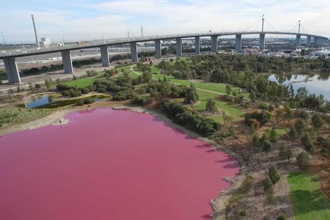 Nhiều du khách hiếu kỳ tới công viên Westgate ở Melbourne để chụp ảnh với cái hồ này. Ảnh: ABC Australia.