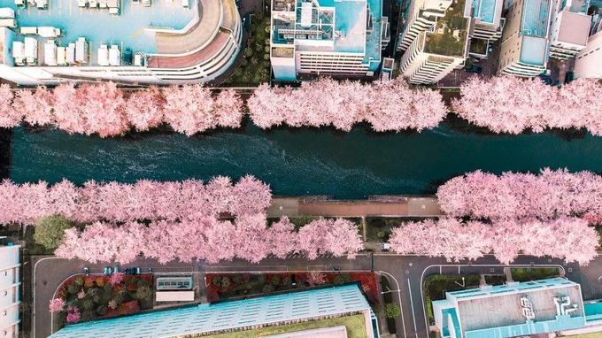 Sông Meguro - 'nàng thơ' giữa lòng Tokyo mùa hoa anh đào