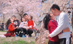 Nhà Ốc Thanh Vân đi Mỹ ngắm hoa anh đào đón sinh nhật bé Cola