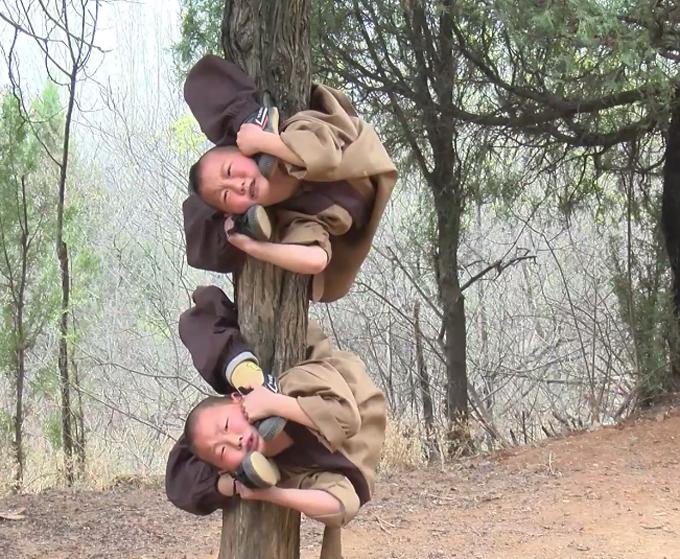 Các đồ đệ nhí của Thiếu Lâm Tự uốn dẻo trên thân cây. Ảnh cắt từ video.