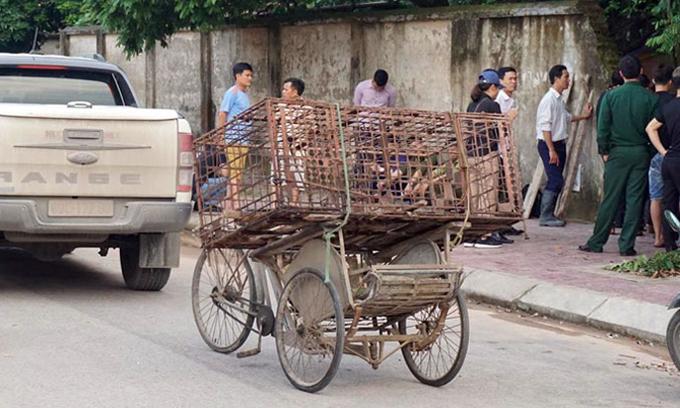 Lực lượng chức năng mang theo lồng sắt, tập trung trước cổng gia đình có đàn chó để bắt giữ. Ảnh: Sơn Phương.