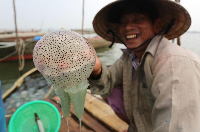 Chèo ghe bắt sứa làm món gỏi chấm mắm ruốc