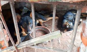 Chủ đàn chó cắn chết em bé ở Hưng Yên có thể bị xử lý hình sự
