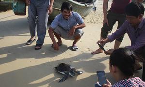Chủ quán nhậu thả rùa quý về biển