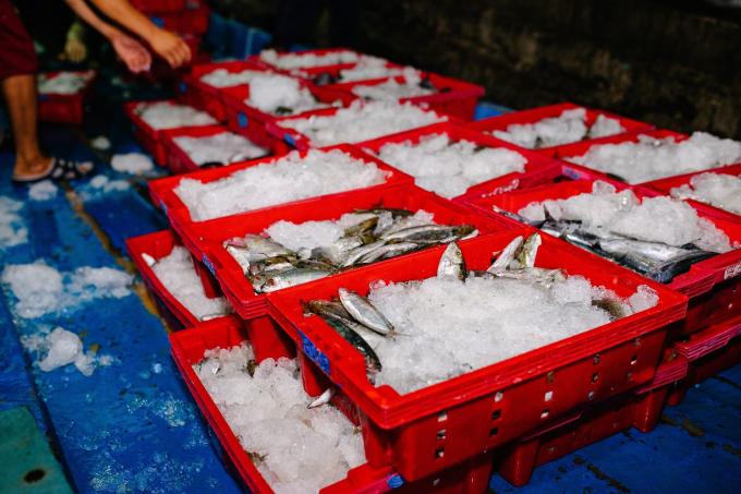 Hành trình 48 tiếng từ cảng biển tới bàn ăn của thực phẩm tại Bách hóa Xanh - 1
