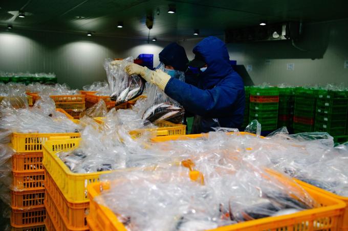 Hành trình 48 tiếng từ cảng biển tới bàn ăn của thực phẩm tại Bách hóa Xanh - 3