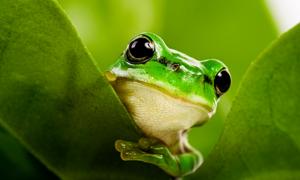 Một phút đọc: Chuyện đàn ếch và sức mạnh của lời nói