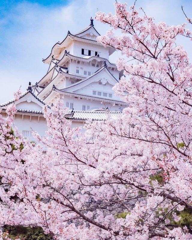 Mùa xuân đẹp như tranh khắp nước Nhật