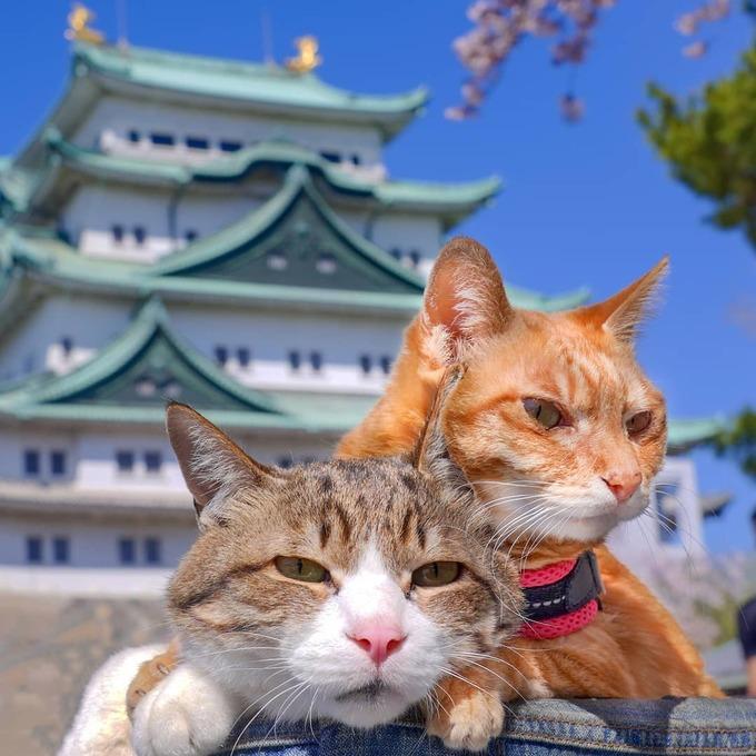 Đôi mèo vẻ mặt chán chường ngao du khắp nước Nhật