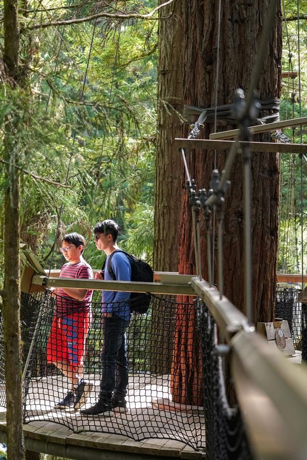 Tê Giác chăm chú đọc thông tin về một gốc cây mọc trước công nguyên, có tuổi đời trên 2.000 năm. Trên vân gỗ có chú thích năm diễn ra thế chiến, năm xây Vạn Lý Trường Thành.