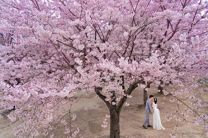 Bộ ảnh được thực hiện dưới trời hoa anh đào nở rực rỡ ở Seoul.
