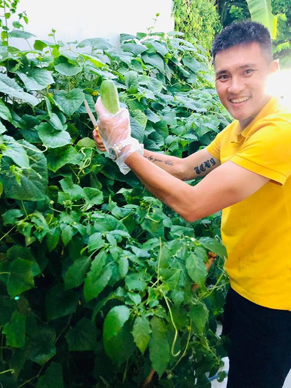 Hôm 9/5, Công Vinh khoe trên fanpage loạt ảnh anh thu hoạch dưa chuột trong vườn nhà. Cựu tuyển thủ người Nghệ An cho biết vụ này nhà anh được mùa dưa chuột, ngày nào cũng thu hoạch hai lần.